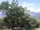 Gardasee 2011_35